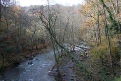 Hermosa vista del río de la cola larga dentro del bosque Foto de archivo libre de regalías
