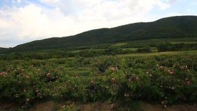 Hermosa vista del valle de la rosa en Bulgaria metrajes