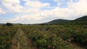 Hermosa vista del valle de la rosa en Bulgaria almacen de metraje de vídeo