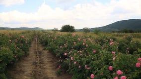 Hermosa vista del valle de la rosa en Bulgaria almacen de video