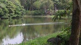 Hermosa vista el lago de Daan Forest Park, en la capital Taiwán de Taipei almacen de metraje de vídeo