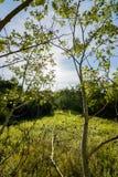 Hermosa vista en bosque Imagen de archivo