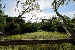 Hermosa vista en bosque Fotografía de archivo libre de regalías