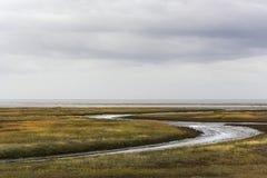 Hermosa vista en los kwelders en la costa este del norte de Texel, una de las islas de wadden en los Países Bajos foto de archivo libre de regalías