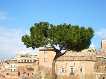 Hermosa vista en tiempo soleado de la primavera en Roma con un pino y edificios viejos encantadores fotos de archivo