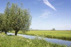Hermosa vista en un paisaje fresco del pólder en los Países Bajos en comienzo del verano foto de archivo