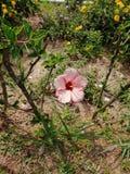 Hermosa vista natural del jardín de flores foto de archivo libre de regalías