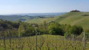 Hermosa vista para uvas Fotografía de archivo libre de regalías