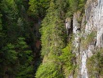 Hermosa vista, valle, garganta, naturaleza pura, Tatras del oeste, Eslovaquia Fotografía de archivo libre de regalías