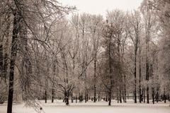 Hermosas vistas del bosque canadiense del invierno en la nieve en los días escarchados de la puesta del sol Árboles cubiertos en  Fotografía de archivo
