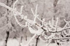 Hermosas vistas del bosque del invierno en la nieve en los días escarchados de la puesta del sol Árboles cubiertos en helada y ni Foto de archivo libre de regalías