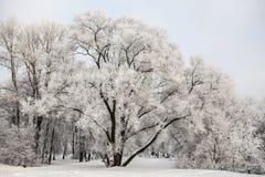 Hermosas vistas del bosque ruso del invierno en la nieve en los días escarchados de la puesta del sol Árboles cubiertos en helada Imágenes de archivo libres de regalías