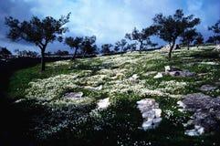 hermoso al aire libre Imagen de archivo libre de regalías