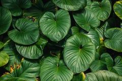 Hermoso de fondo verde de la hoja imágenes de archivo libres de regalías