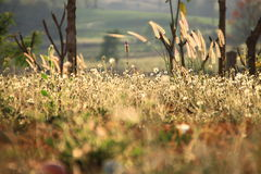 hermoso de hierba Imagen de archivo libre de regalías