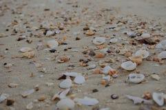 Hermoso de muchas cáscaras en la arena la playa Fotos de archivo