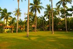 Hermoso muchos árboles de coco en casa de playa Fotos de archivo