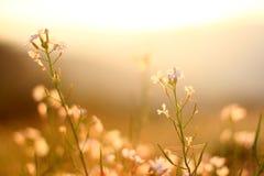 Hermoso olvídeme no los flores Fotografía de archivo libre de regalías