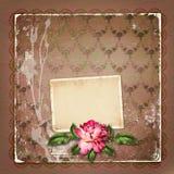 Hermoso pintado subió con los marcos para la enhorabuena Imágenes de archivo libres de regalías