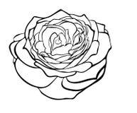 Hermoso subió en el estilo del grabado blanco y negro. ilustración del vector