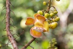 Hermoso texturizado en el ` anaranjado s de la flor se va, Fotos de archivo