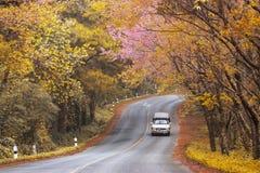 Hermoso turístico del camino del otoño del viaje popular romántico de la primavera en Doi Ang Khang, Chiang Mai, Tailandia Foto de archivo libre de regalías
