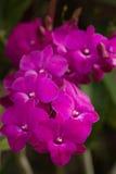 Hermoso violeta de las orquídeas Foto de archivo libre de regalías
