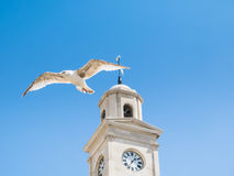 Herne Bay clock tower and seagull Stock Images