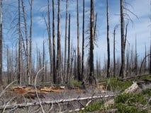 Hernieuwde groei na de Hoge Berg Forest Fire stock fotografie