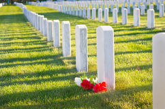 Hero. Bright red and white flowers adorn a soldier's grave in a military cemetery Royalty Free Stock Images
