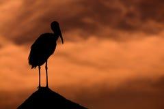 Heron. Silhouette heron on red cloudy Stock Photos