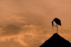 Heron. Silhouette heron on red sky Royalty Free Stock Images