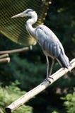 Heron Fotografering för Bildbyråer