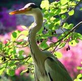 Heron stock image
