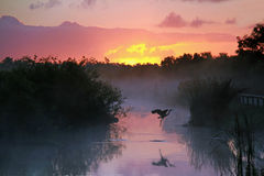 Free Heron At Sunrise In The Everglades Royalty Free Stock Images - 25113379