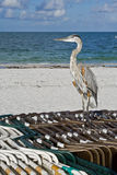 Heron on the beach Royalty Free Stock Image