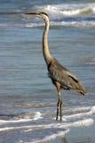 Heron on the Beach Royalty Free Stock Photos