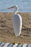 Heron on the beach Stock Image