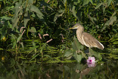 Heron Bird Stock Photos