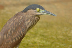 Heron Bird Royalty Free Stock Images