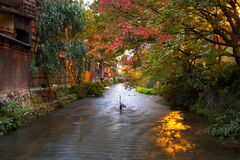 Heron bird in autumnal scenery of Kyoto Stock Photo