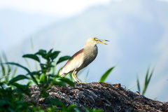 Heron Bird Stock Photo