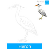 Heron bird learn to draw vector Stock Photo