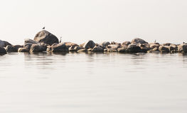 Heron bird stand on a rock Stock Image