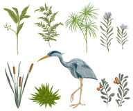 Heron bird and swamp plants. Marsh flora and fauna. Royalty Free Stock Image