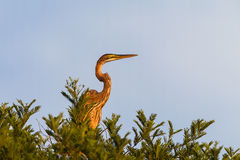 Heron Bird Tree stock photo