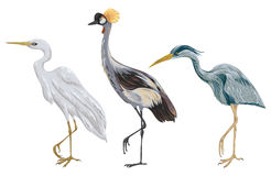 Heron birds set. Marsh fauna. Isolated elements. Vintage hand drawn vector illustration in watercolor style Royalty Free Stock Images