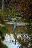 Heron in Canal stock photo