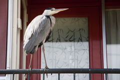 Heron in the city Royalty Free Stock Image