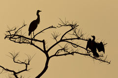 Heron & Cormorant silhouette Royalty Free Stock Images